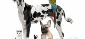 The truth about the Great Dane