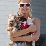 paris-hilton dog