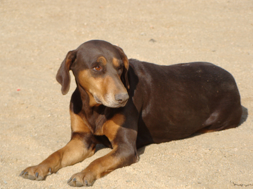 Good Dog Names For Brown Dogs