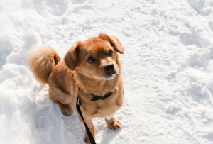 Lovely dog in the snow